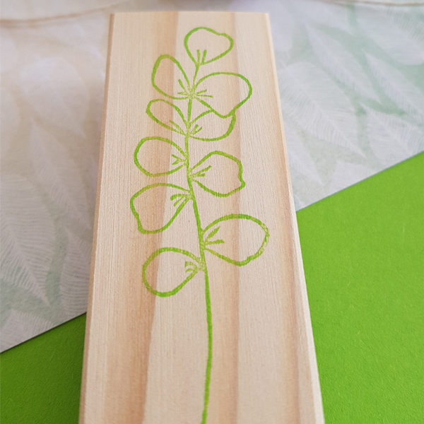 tampon branche eucalytpus